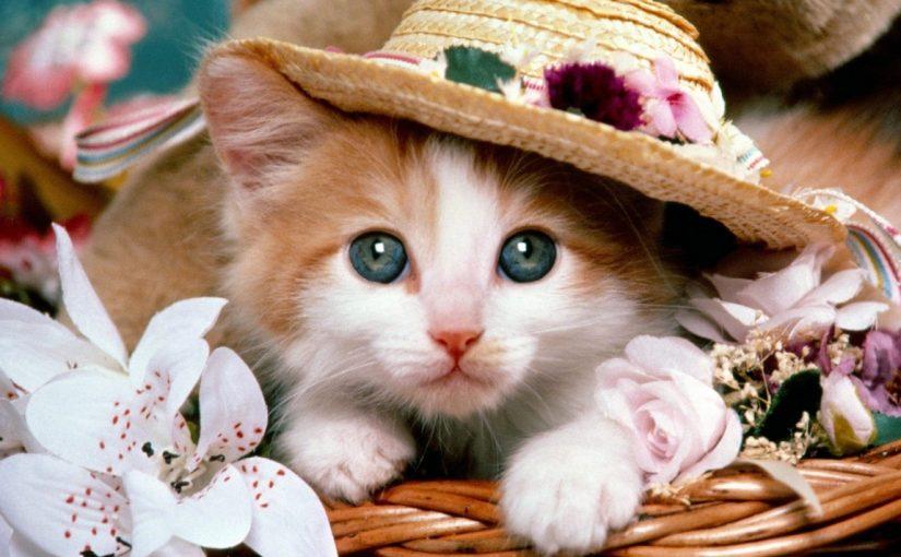 اسماء قطط ملكية ذكور