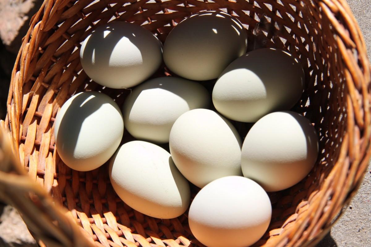 ما تفسير حلم جمع البيض في المنام للمتزوجة