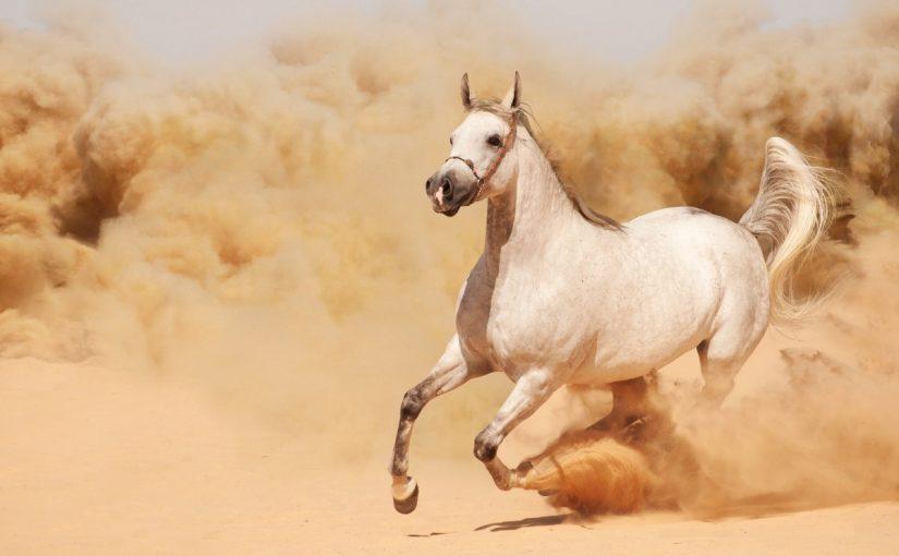 تفسير حلم الحصان الأبيض الهائج