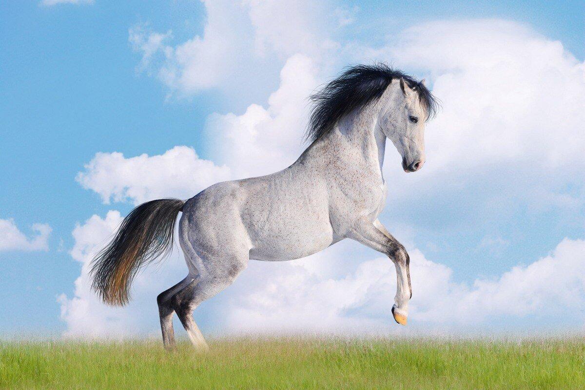 تفسير الأحلام حصان يهاجمني