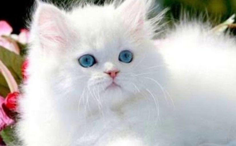 هل القطط تجلب الرزق