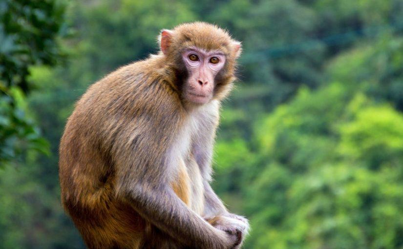 القرد في المنام للرجل المتزوج