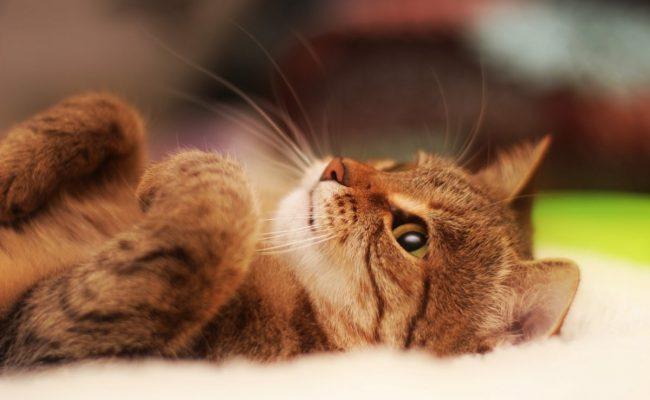 اسماء قطط عربية انثى
