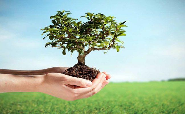 فوائد الزراعة في مجال البيئة