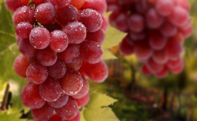 تفسير رؤية العنب الأحمر في المنام