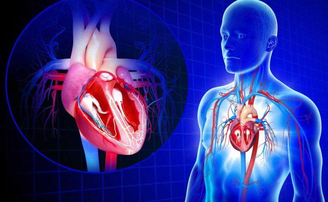 أسباب ضعف الدورة الدموية