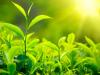 كيف تساعد الاوراق النباتات على العيش (تم الإجابة)