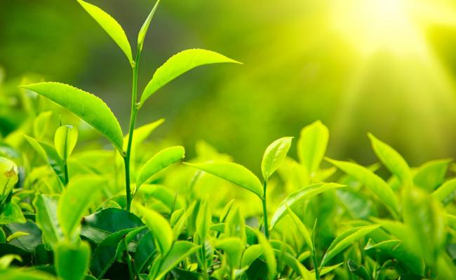 كيف تساعد الاوراق النباتات على العيش