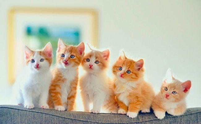 اسماء قطط ذكور اجنبية
