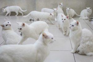 اسماء قطط ذكور بيضاء