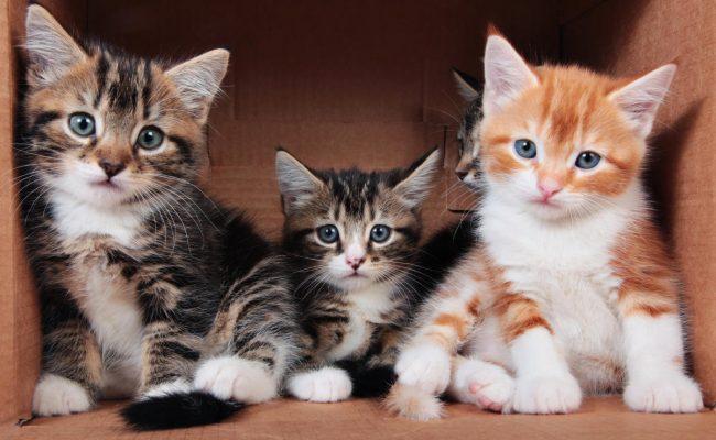 ألوان القطط في المنام