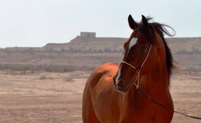 أسماء خيول عربية أصيلة ومعانيها
