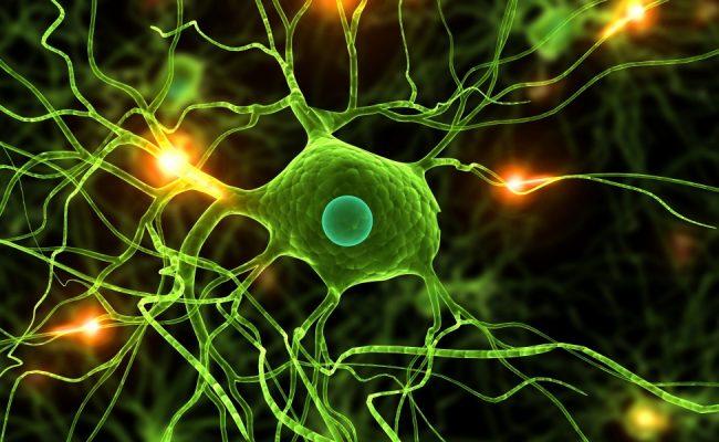تنشأ الخلية من خلايا سابقة لها