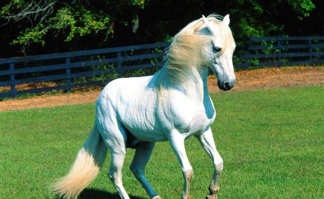 ماذا يسمى صغير الحصان